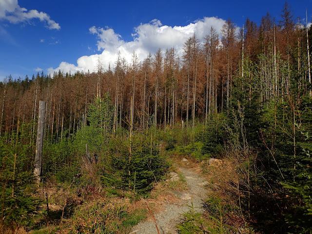 Szlak na odcinku Cyrhla-Psia Trawka