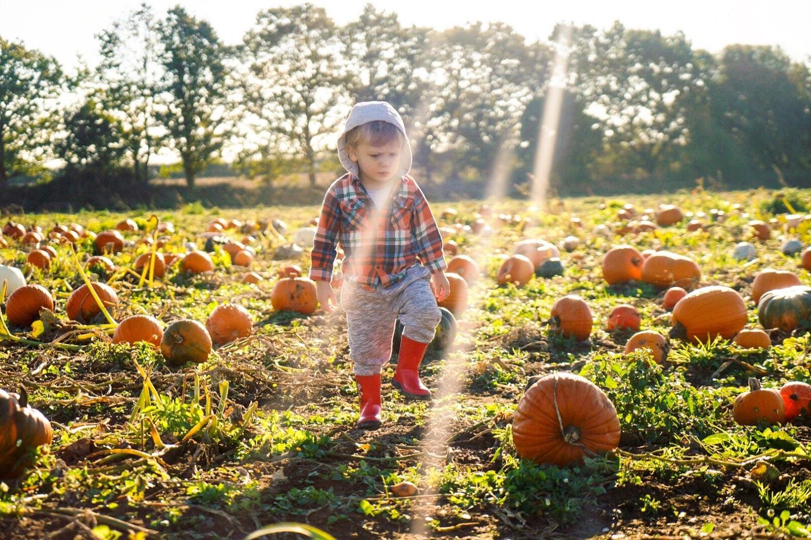 pumpkin patch shrewsbury, free days out shropshire