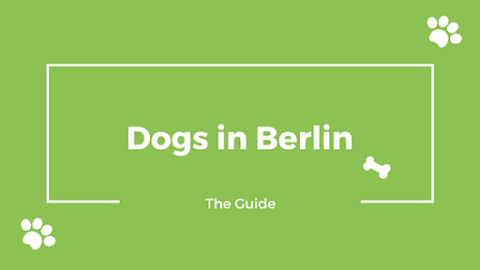 Having a dog in Berlin