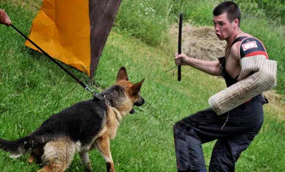 الاخطاء العشره التى ترتكب فى تربيه الكلاب تعرف عليها