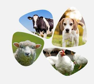 Free animal health checkup mungpoo