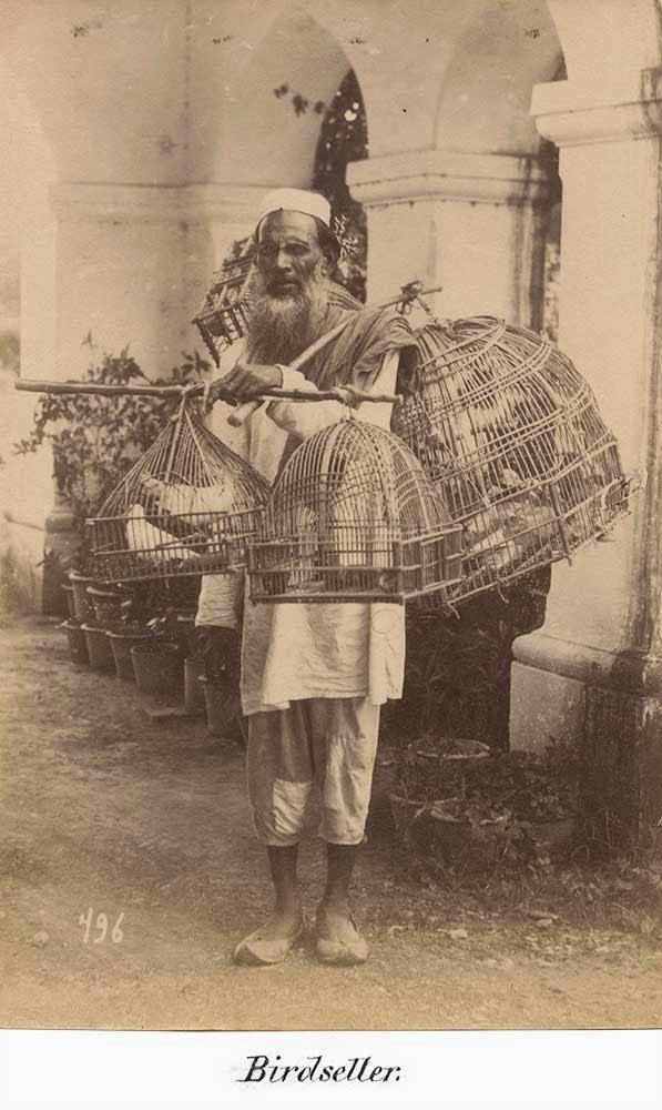 The Birdseller, Albumen Print - 19th Century
