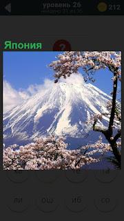 Пейзаж Японии, вулкан и на его фоне цвете сакура