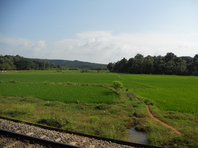 Paddy Field Near a Railway Track