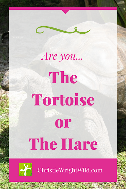 Are you the tortoise or the hare? || overcoming writing fear | how to face your running fears | dealing with anxiety in your writing career | how to overcome anxiety for runners