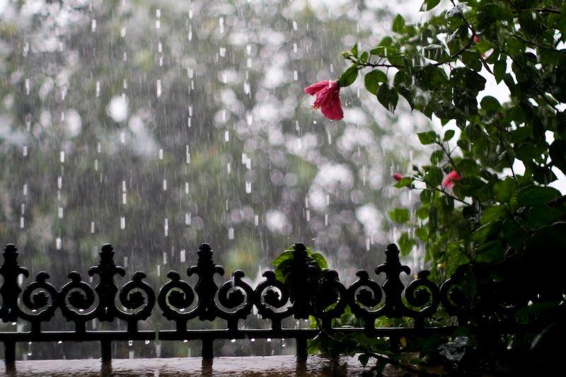 Actually  the rainy se...