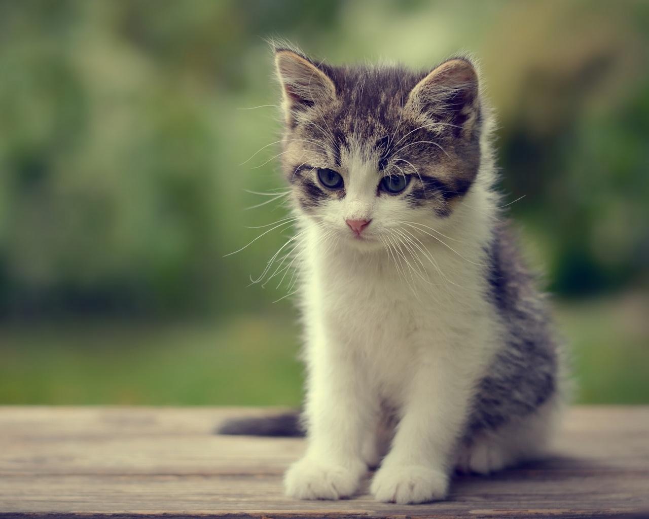 Котята на экран планшета, котики - Скачать HD Обои на ...