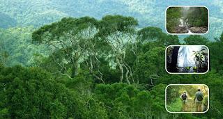 Keanekaragaman Hayati tingkat Geneti, Individu, dan Ekosistem
