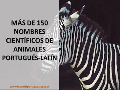 nombres científicos, animales, latín, portugués
