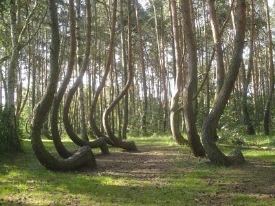 Dünyanın En İlginç 4 Ormanı