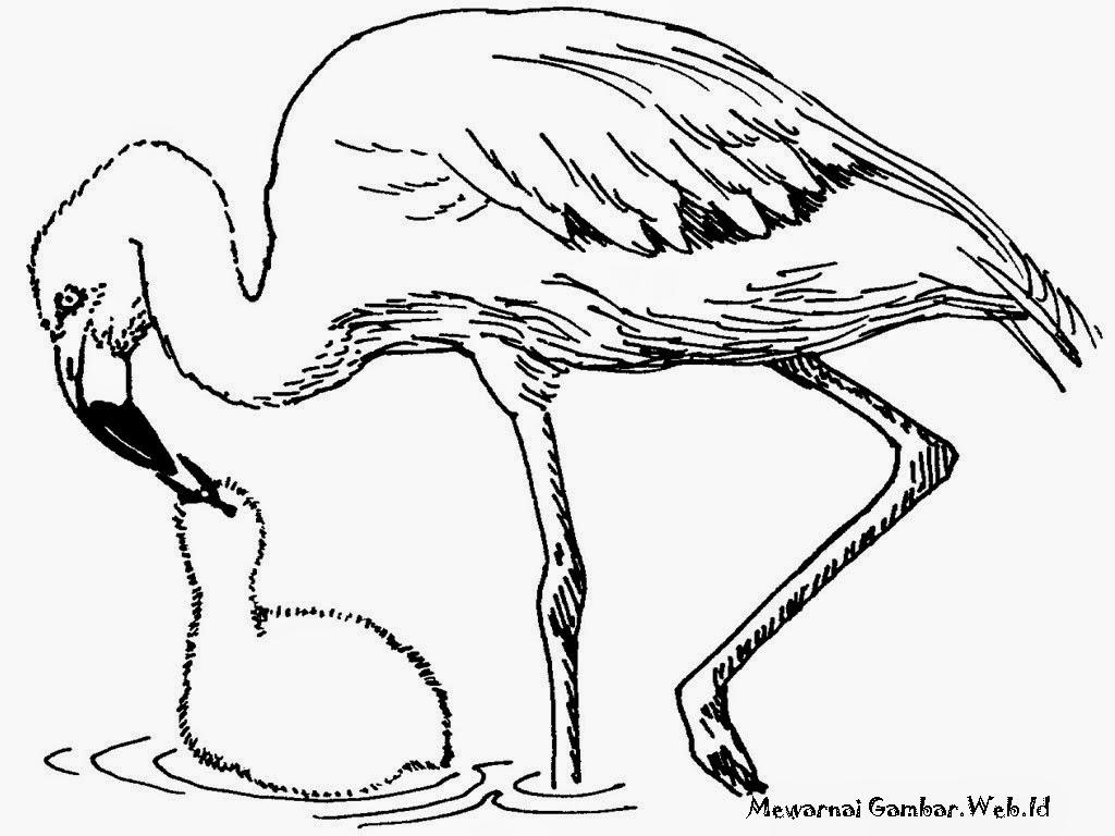 Mewarnai  Gambar  Burung Flamingo  Mewarnai  Gambar