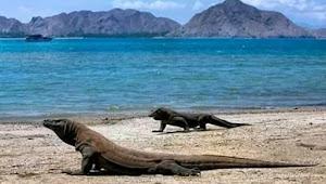 Taman Nasional Komodo akan Ditutup Selama Setahun