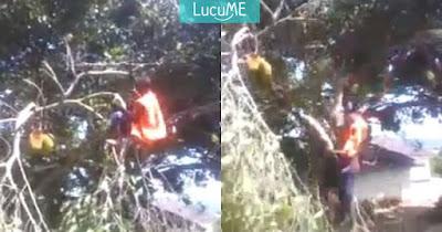 Kocak Campur Kasihan, Aksi Pria Tebang Pohon Ini Ngawur Abis