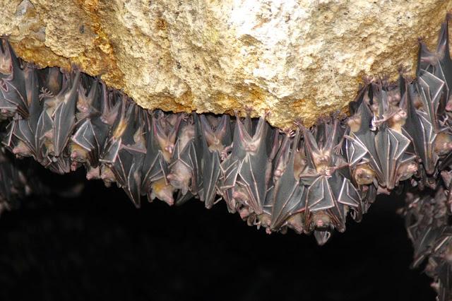monfort bat cave colony sanctuary