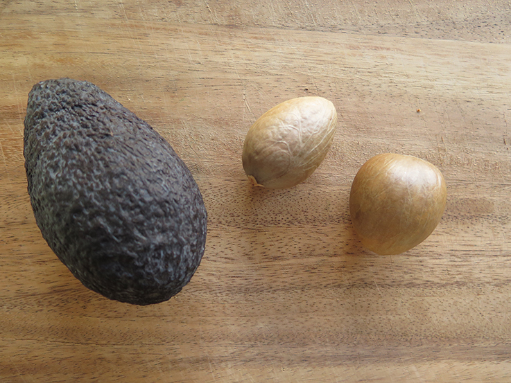 Avocado seed shampoo update