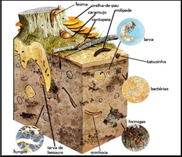 A Ecologia dos Anelídeos