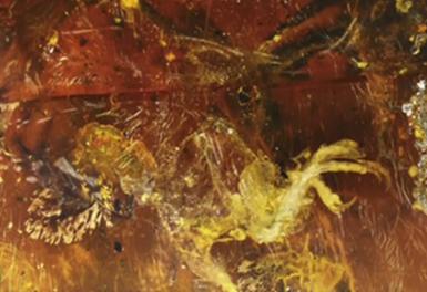 Βρήκαν πτηνό 99 εκατομμυρίων ετών παγιδευμένο σε κεχριμπάρι