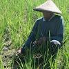 Kegelapan nasib dan masa depan pertanian Indonesia semakin nyata