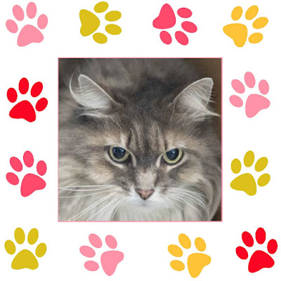 Madeline, a gray tabby cat, in pawprint frame