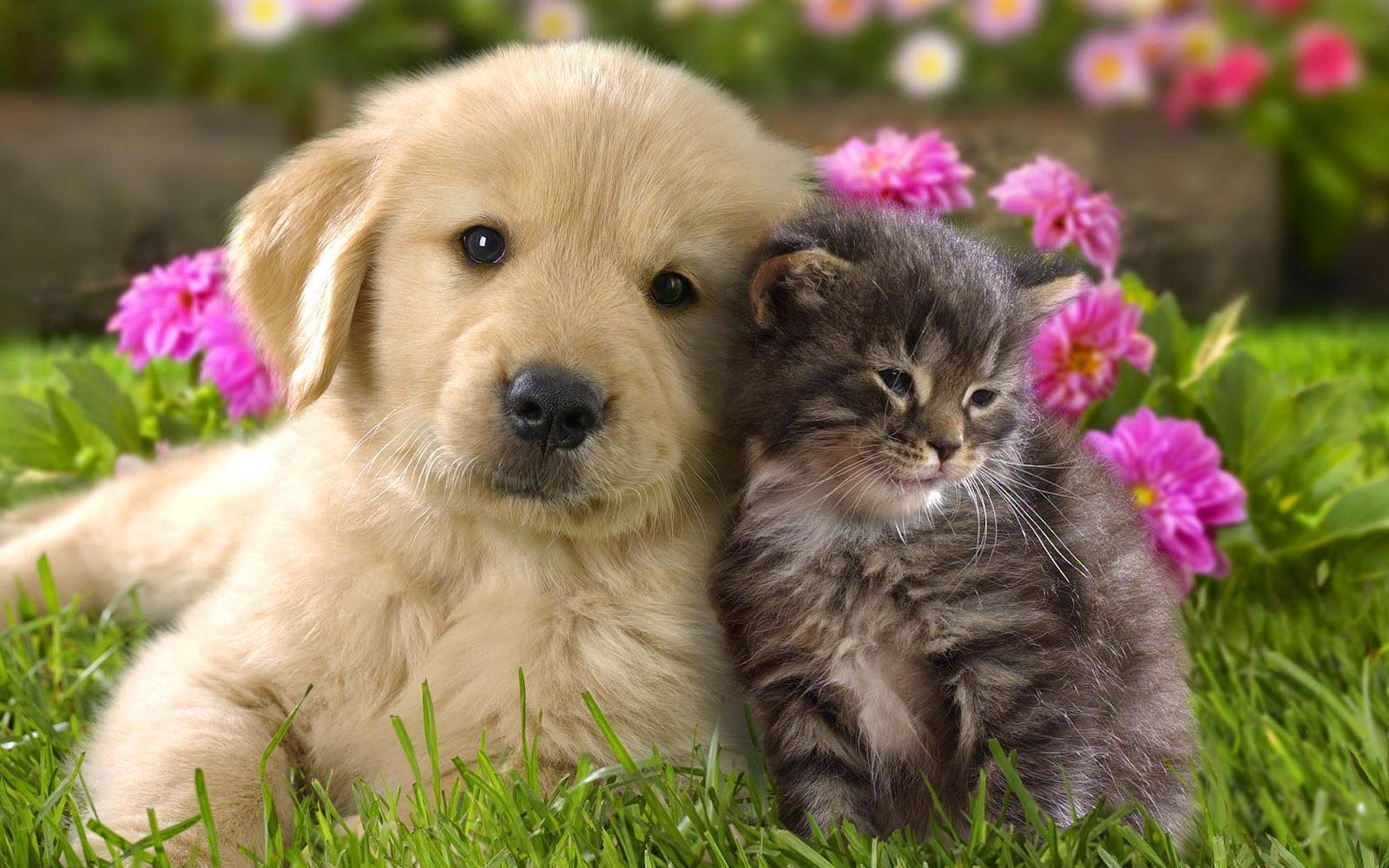 Tapety Na Pulpit Mały Kotek I Piesek Słodkie Koty I Psy Kot I