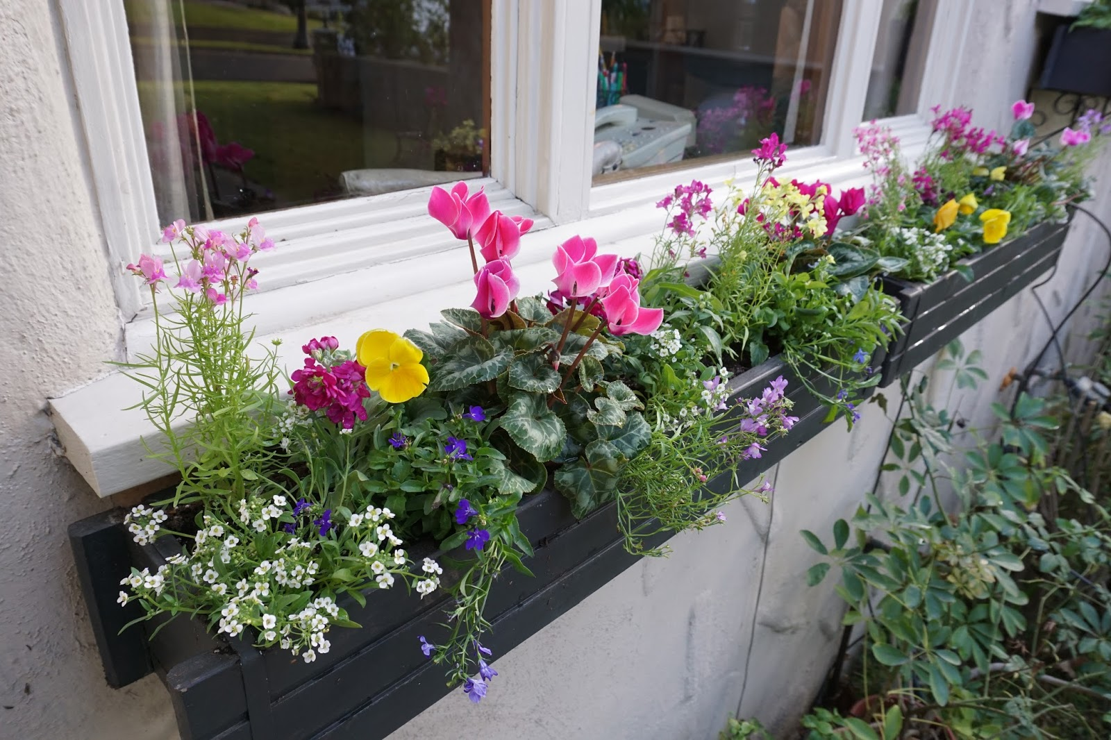 Andie's Way: Bright and Cheerful Winter Window Boxes