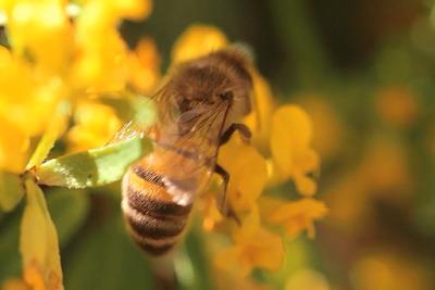 Sciences ~ L'énergie des abeilles dans - SCIENCES