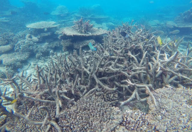 Life goes on for marine ecosystems after cataclysmic mass extinction