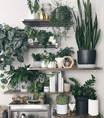 Rośliny zimą