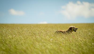 """""""Paseando con perro por la naturaleza"""", una excursión didáctica para pasear con mascota por un entorno natural. Ver. Oír. Contar."""