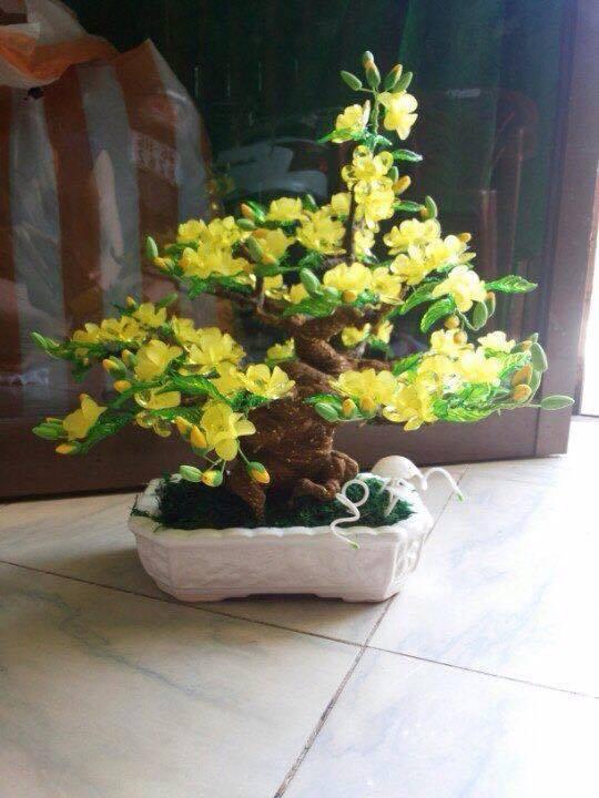 Goc bonsai mai dao o Thanh Xuan