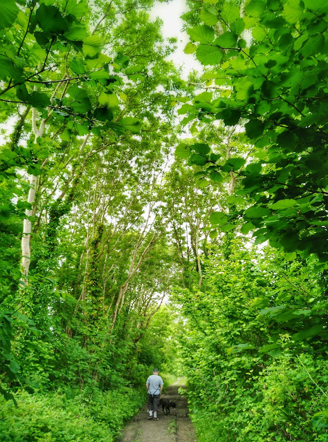 green forest, Connemara