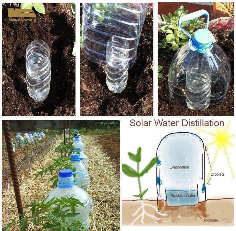 Pollice Nero Irrigazione A Goccia Fai Da Te