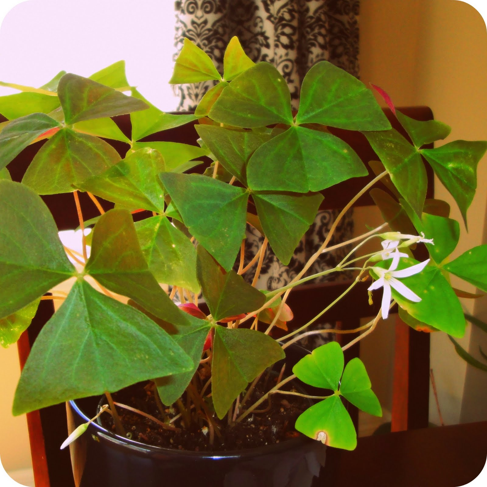 House Plants For Shady Rooms: The Scientific Domestic: House Plants II