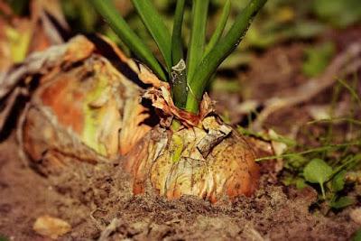 Ilmu Hama dan Penyakit Tumbuhan