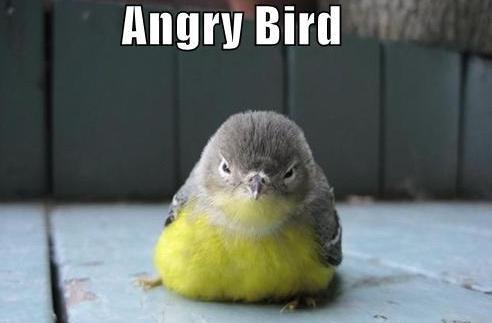 写真:怒り