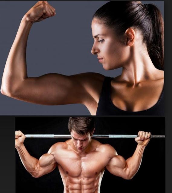 Crean músculo humano con células madre