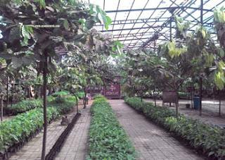 Area Pembibitan di Kampung Coklat, Blitar