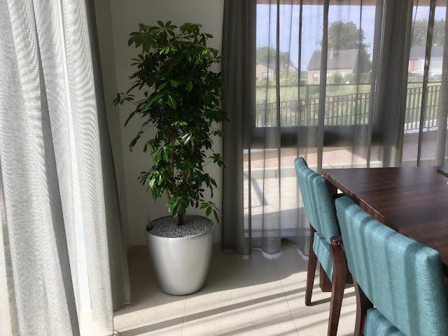 Kantoorbeplanting met onderhoudscontract planten die lucht zuiveren en weinig licht nodig hebben in België (Brussel Antwerpen Gent Leuven Hasselt) Prijzen op aanvraag
