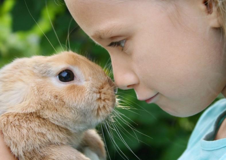 Kelinci dan anak-anak