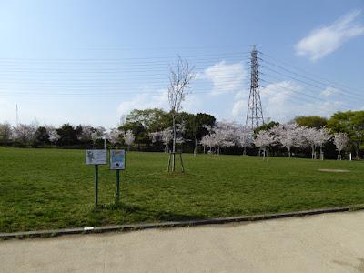 寝屋川公園 芝生広場(バーベキュー指定区域)の桜