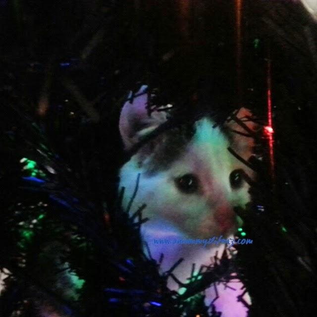 """amummyslifenz"" ""Kittie in the Tree"""