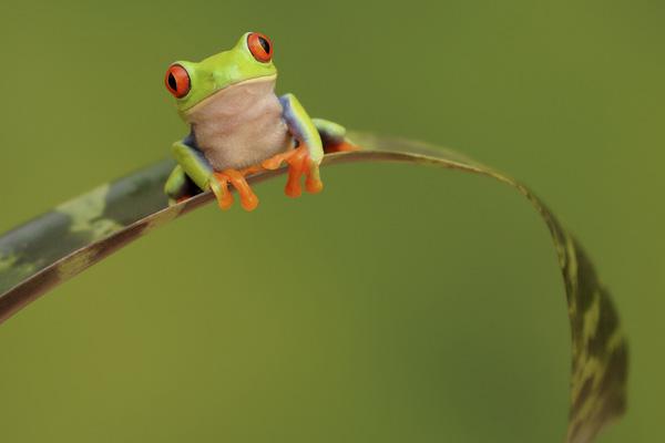 Con ếch nghễnh ngãng và bài học mặc kệ những lời đàm tiếu