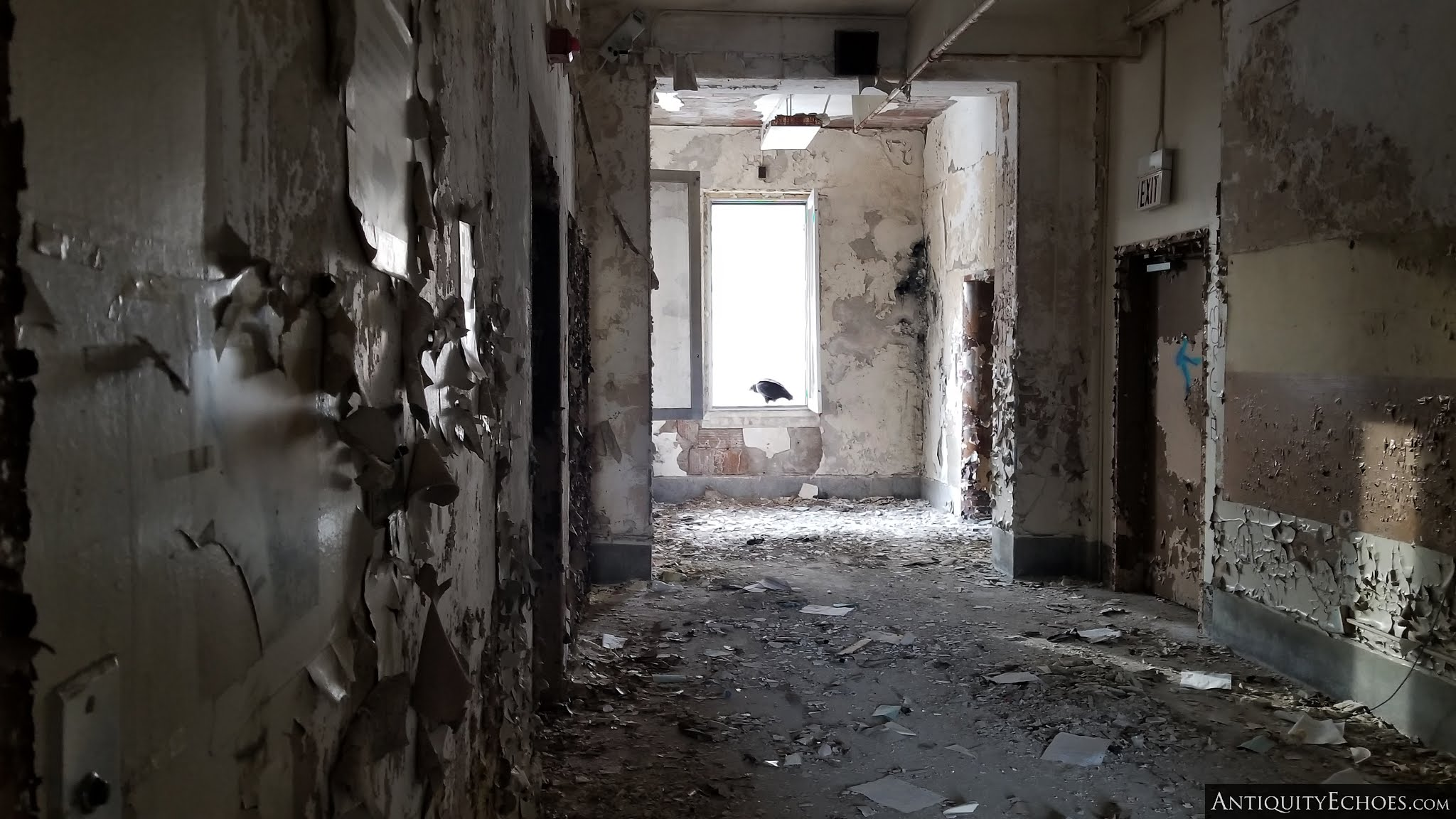 Overbrook Asylum - A Vulture Perches in a Windowless Frame