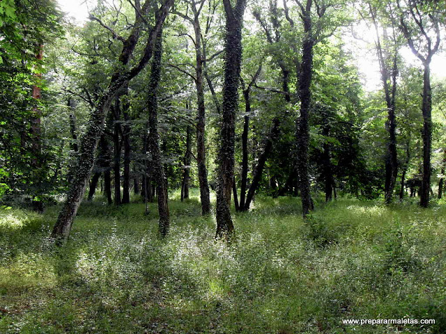 zona de bosque en la granja segovia