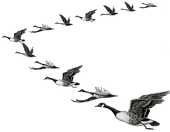 geese flying south coloring pages - photo#34