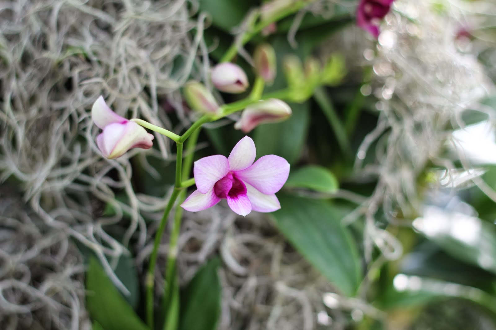 Far man ta med sig orkideer hem