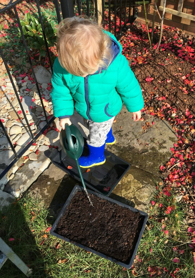 How-to-Sow-Seeds-for-Absolute-Beginners-image-of-toddler-with-watering-can
