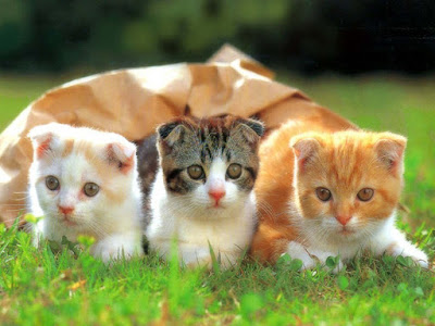 three-cat-kitten-sitting-toghther-on-the-grass
