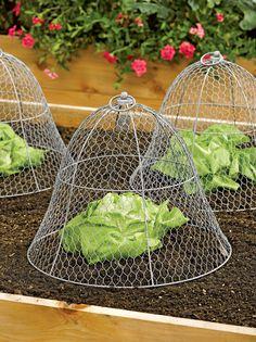 วิธีป้องกันผักสวนครัวจากนก