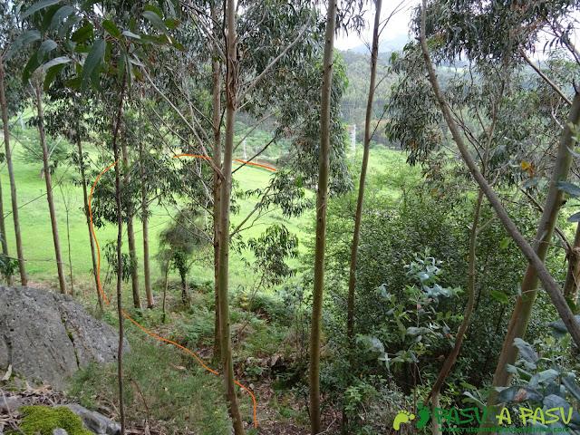 Tramo entre eucaliptos bajando del Castiellu en Molleda
